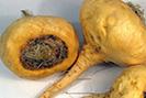 Fitoterapia disfunzione erettile