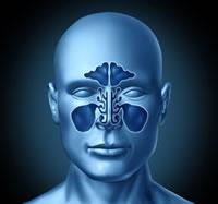 Introduzione sinusite