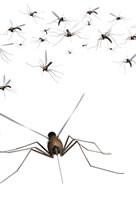 Cause punture di insetti